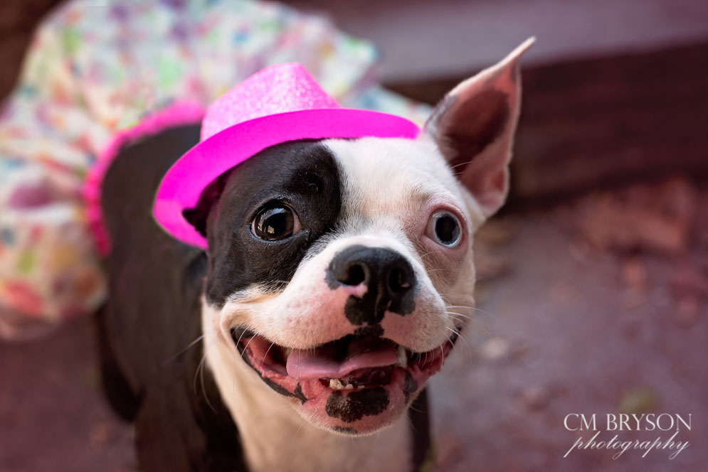 Pet Photography Project 52 Week 4 Catch Lights Cm Bryson