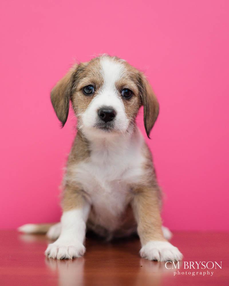Pet Photography Project 52: Week 1 – Blank Slate