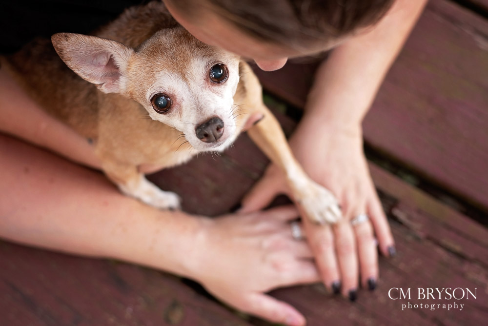 Photo of a chihuahua with her paw on top of her moms' hands.