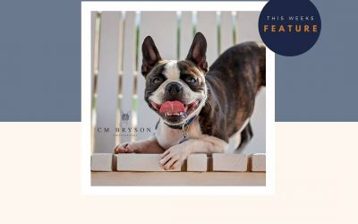 Featured Pet Photographer