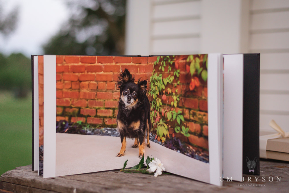 Chihuahua dog photo album