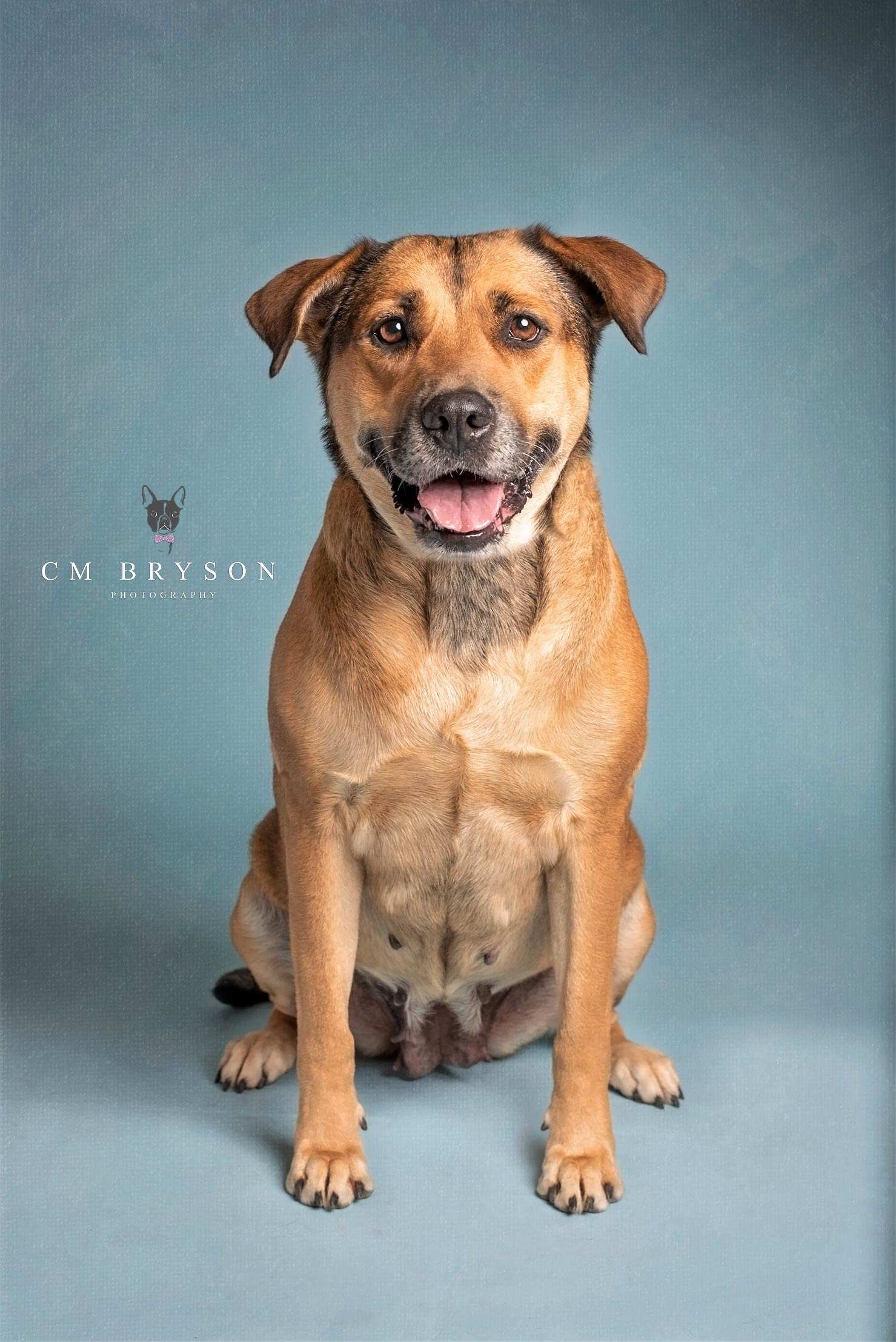 Sadie - Shepherd Mix - Adoptable Dog