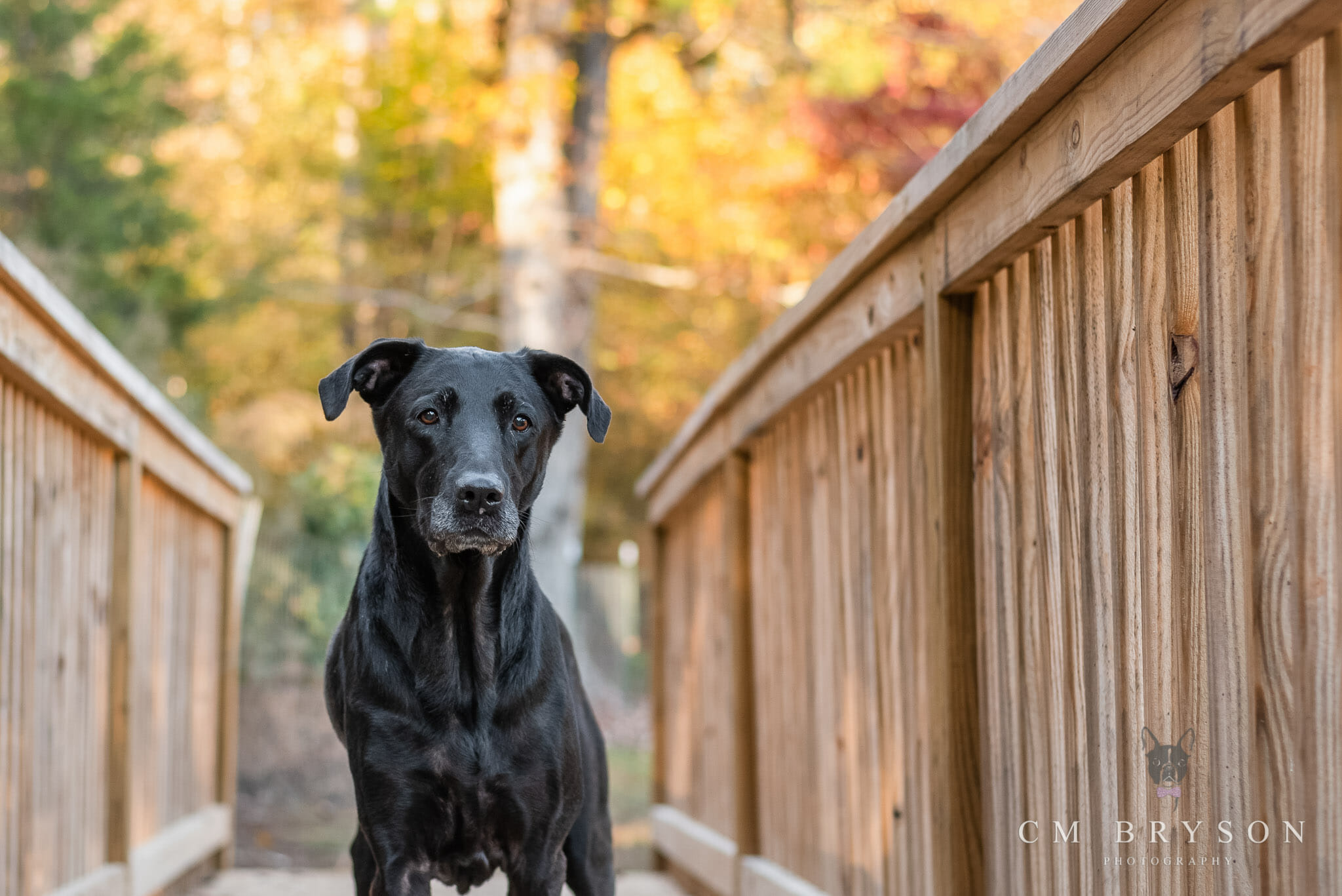 Learning how to choose the best location for pet photography means your black dog won't look like a black blob.