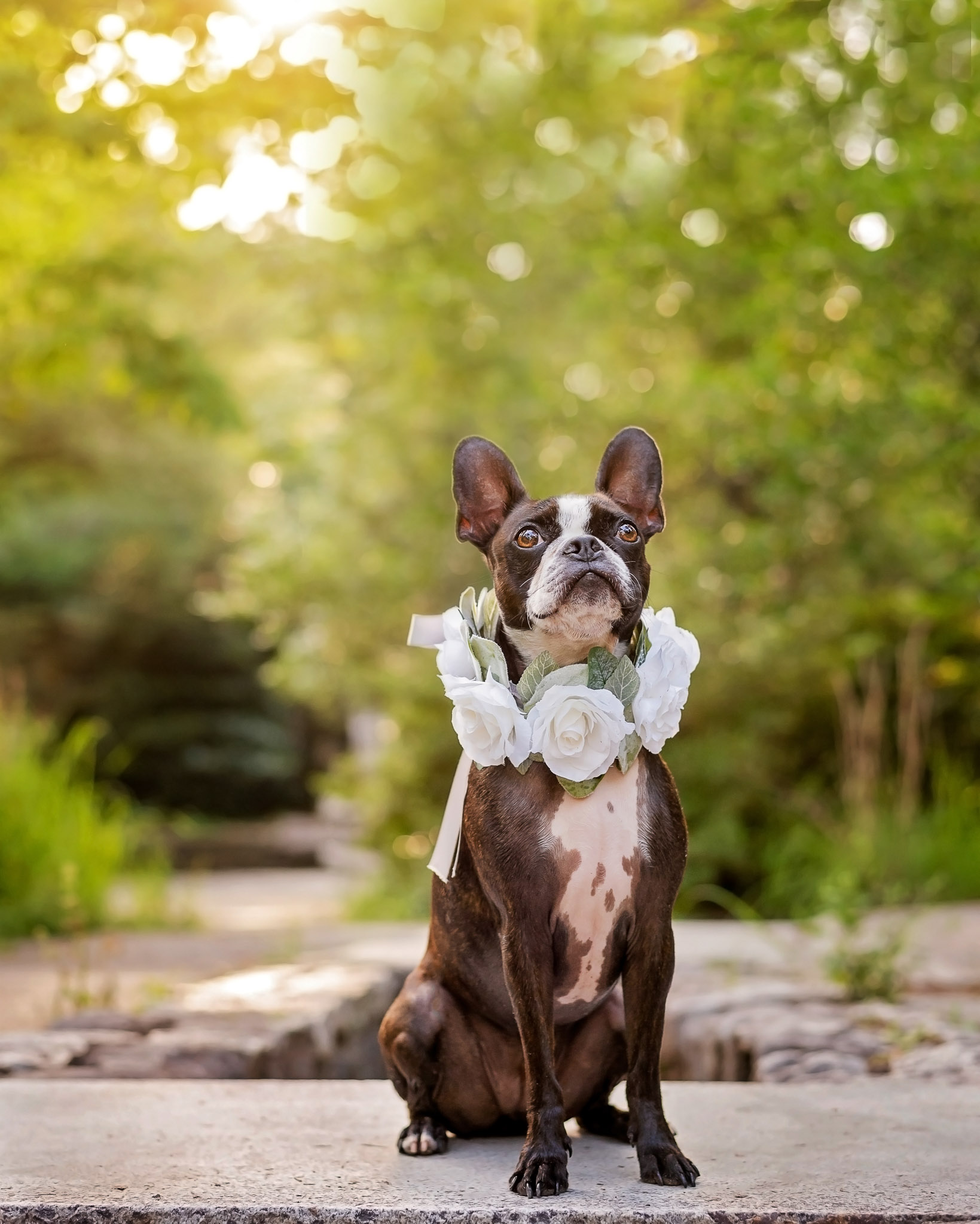 The first step in fininding the right location for dog photography is to look for the right light.