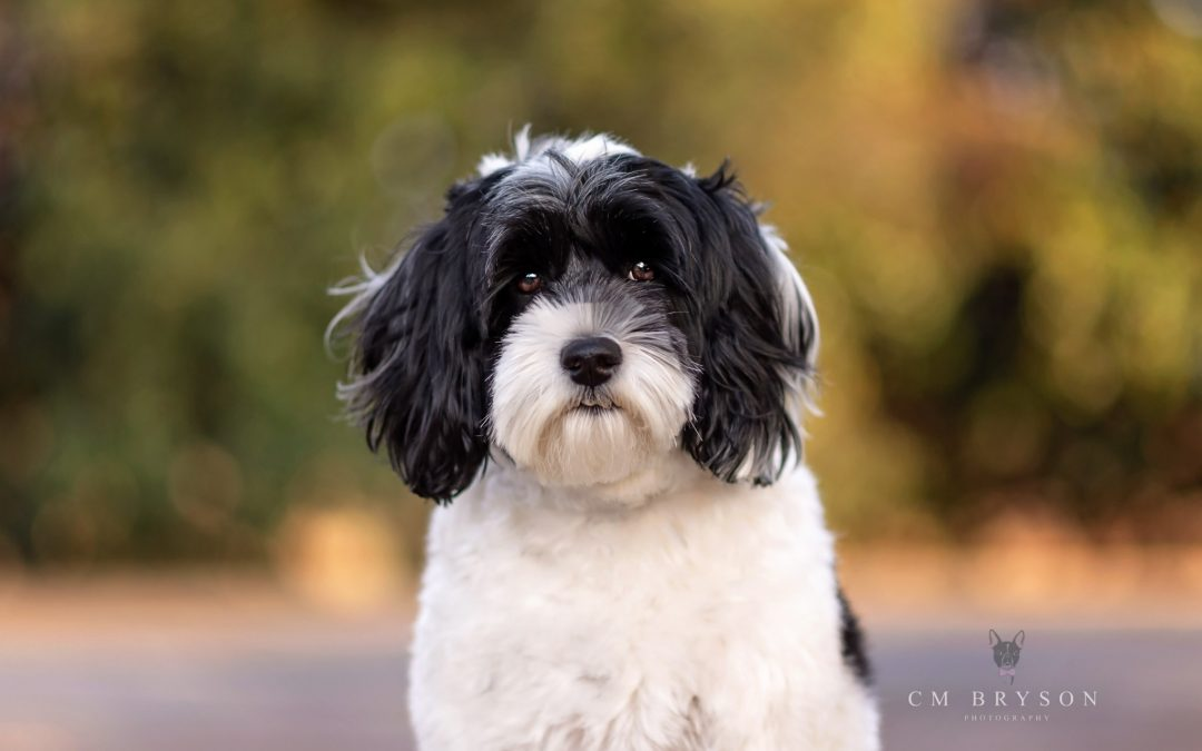 Pet Photography at Piedmont Park