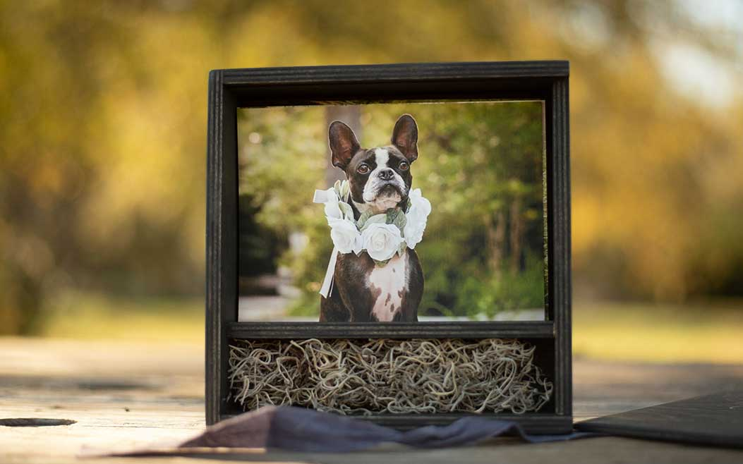 Image boxes feature a collection of favorite images from a pet photography session. Digital files are included in the largest image boxes.