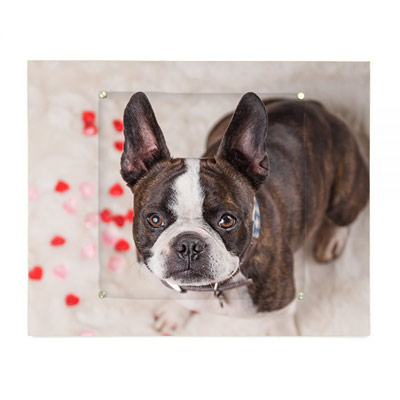 Unique wall art option from your pet photography session