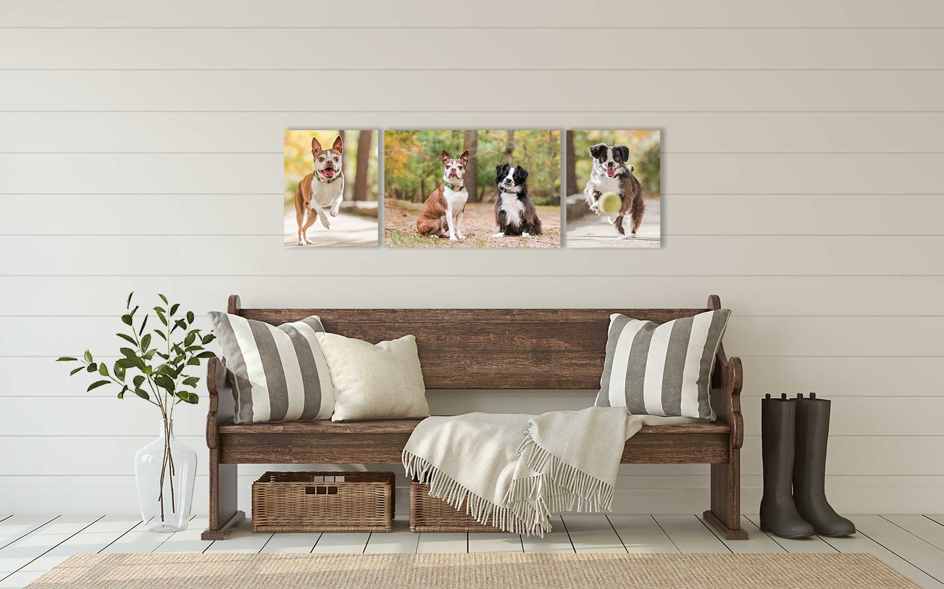 Your walls can be decorated with custom dog photos by Atlanta dog photographer, CM Bryson.