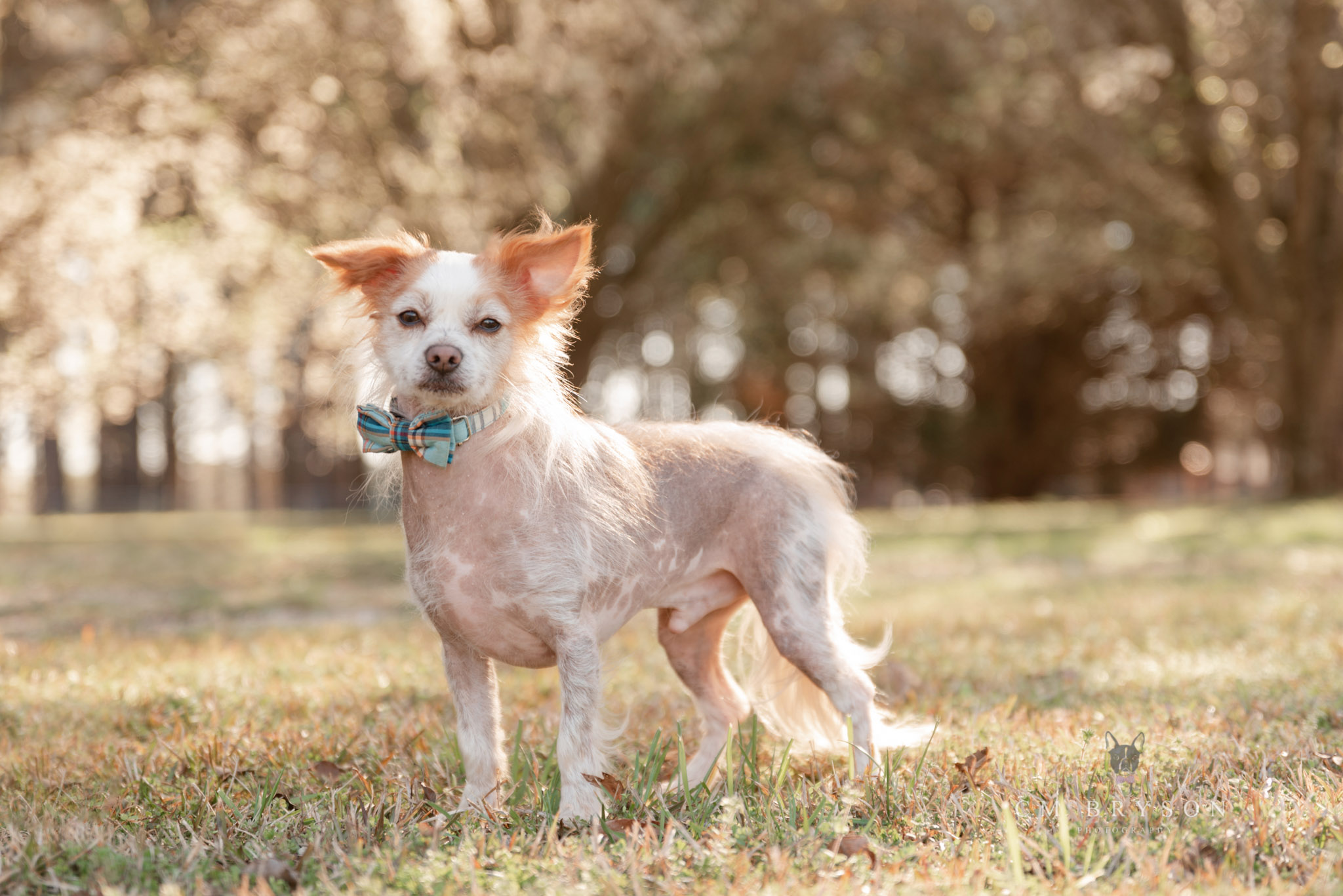 An example from Atlanta pet photographer, Courtney Bryson, showing the leash removal available for pet photos.
