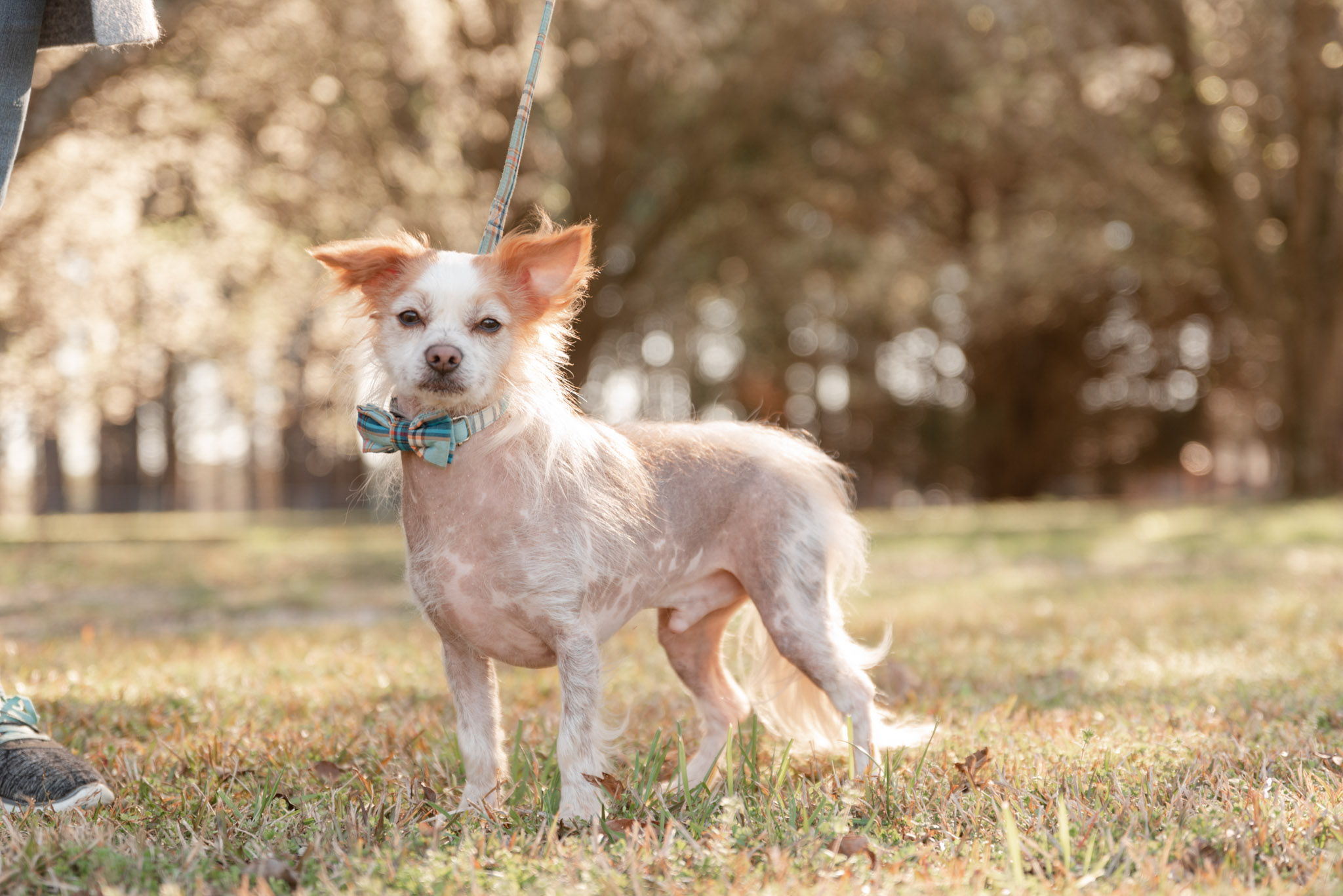 Atlanta pet photographer, Courtney Bryson, shows how leashes are removed in final images from a pet photography session.