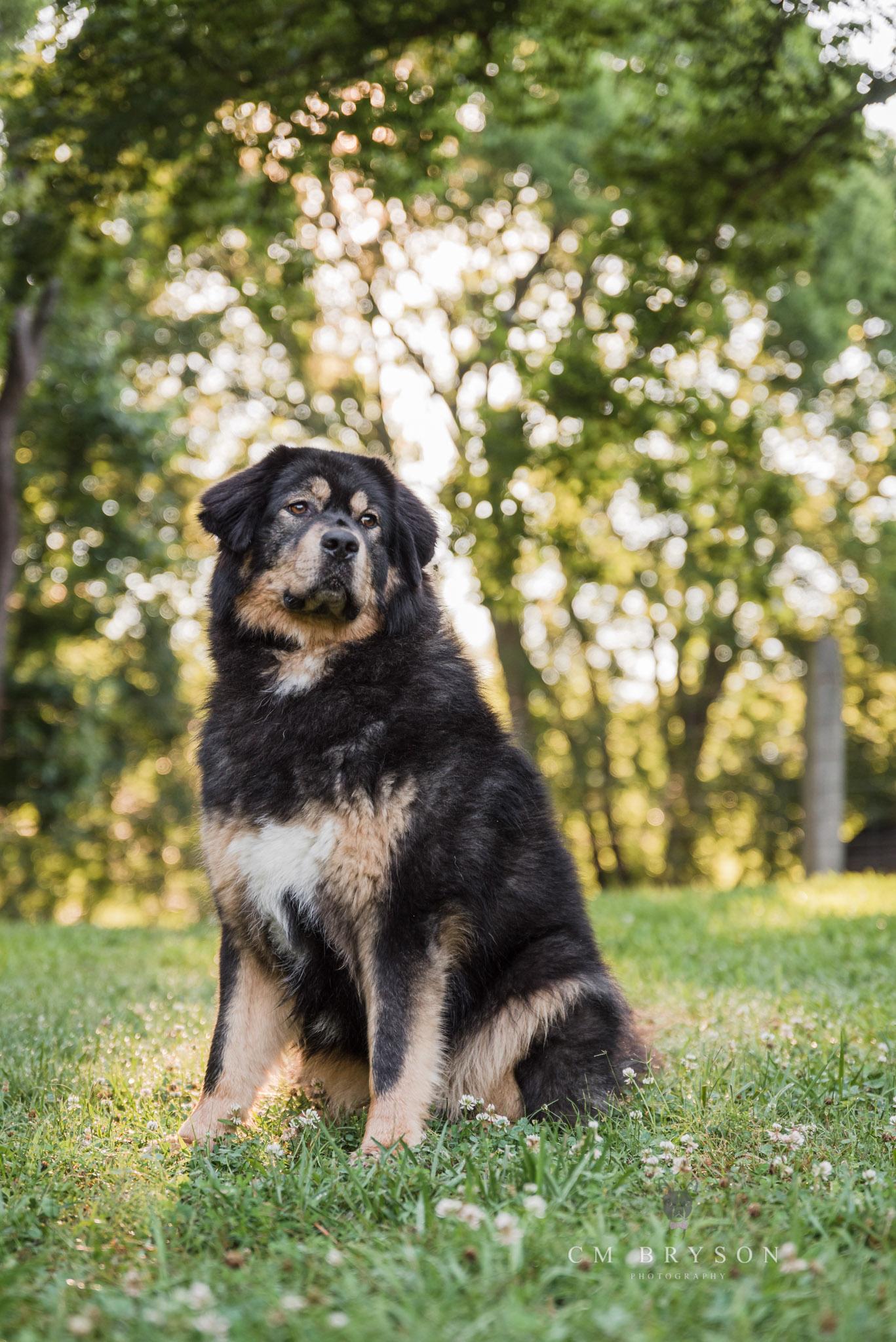 Atlanta pet photographer photographs dogs in a natural park setting at McDaniel Farm Park in Duluth, Georgia.