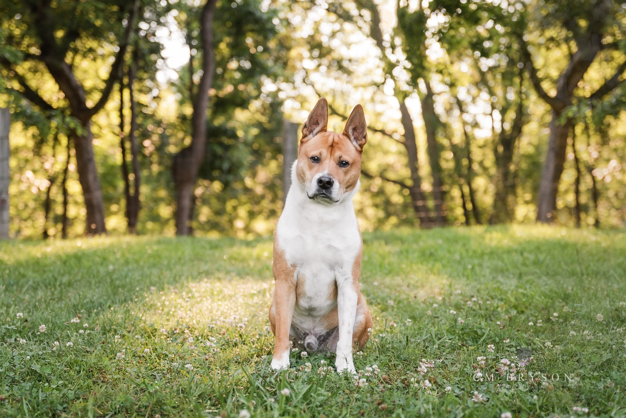 Pet photography is possible even with senior pets and dogs who need to stay on leash.