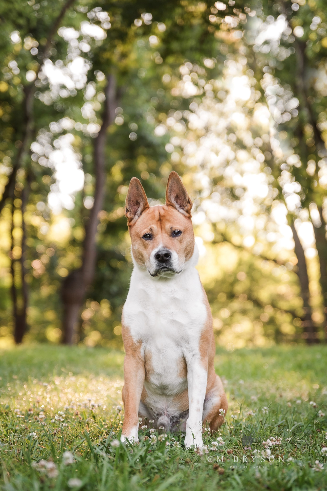 Even senior dogs deserve their moment in the sun with a custom pet photography session in Georgia.