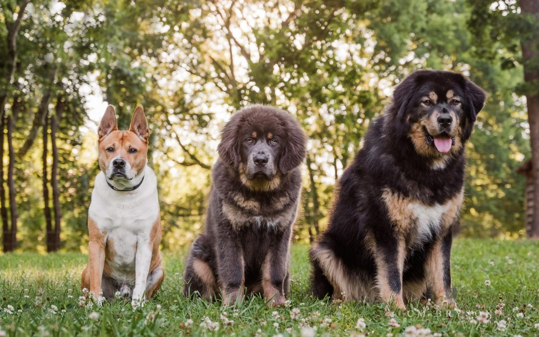 Dog Photography at McDaniel Farm Park in Duluth, Georgia