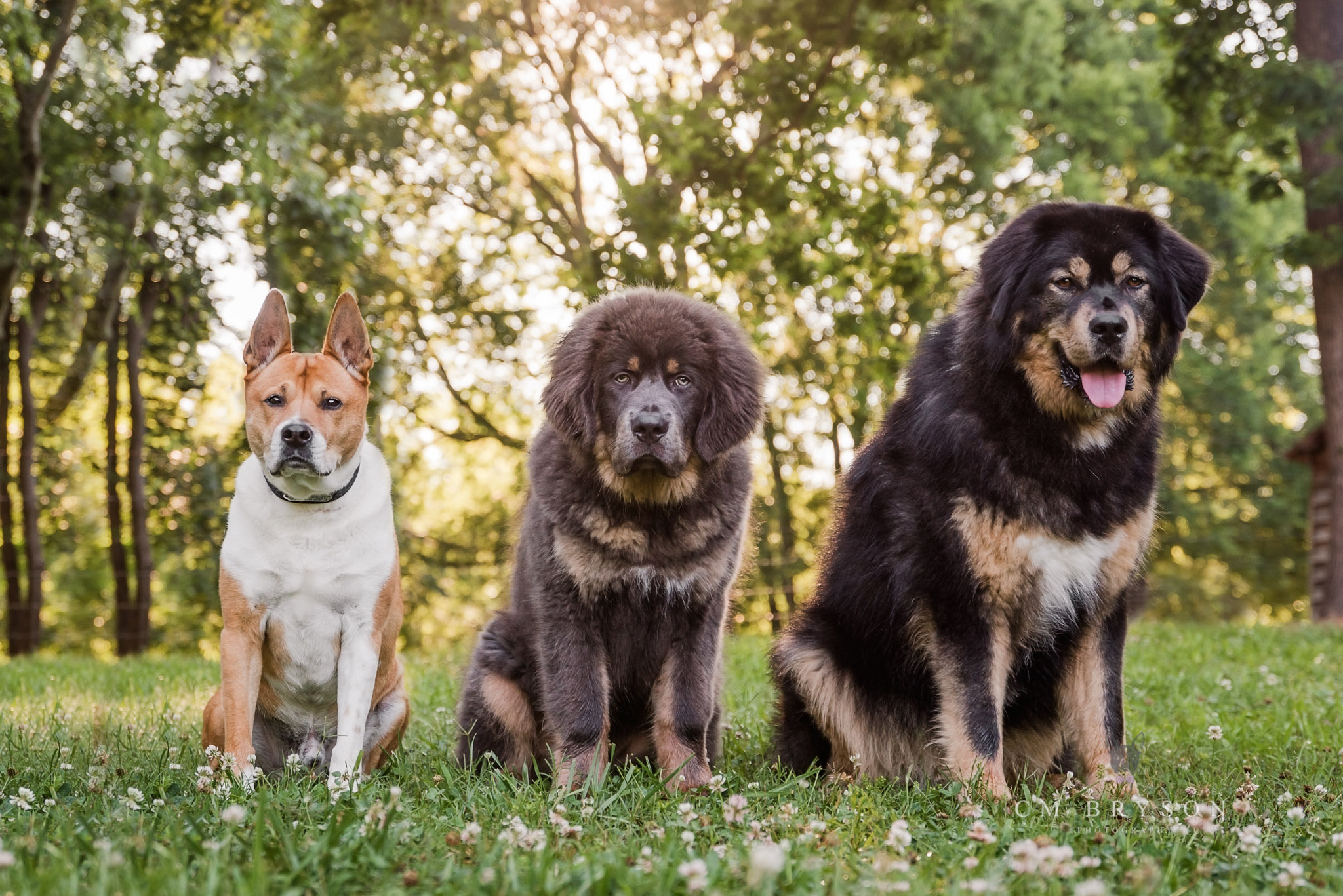A photograph of all your dogs together is one of the most requested shots by clients of professional Atlanta dog photographer.