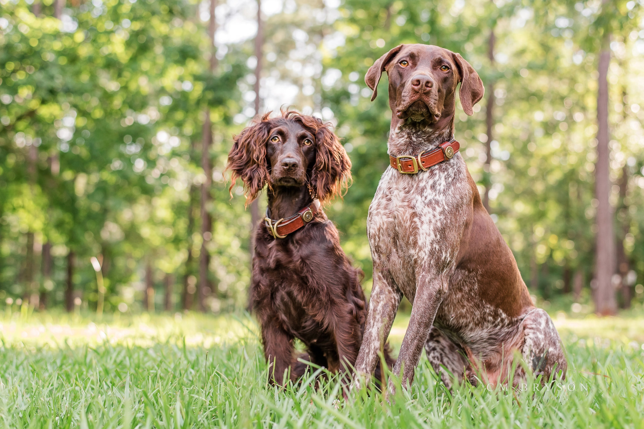 Athens pet photographer captures hunting dog breeds in a gorgeous natural setting.