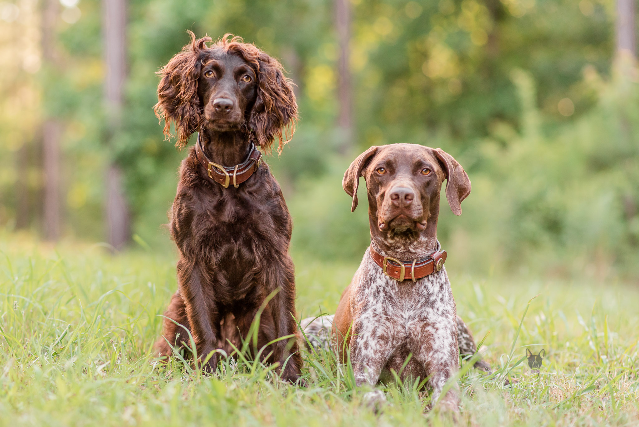 A pet photographer can help you get images of your dogs together during a dog photo shoot in Madison, Georgia.
