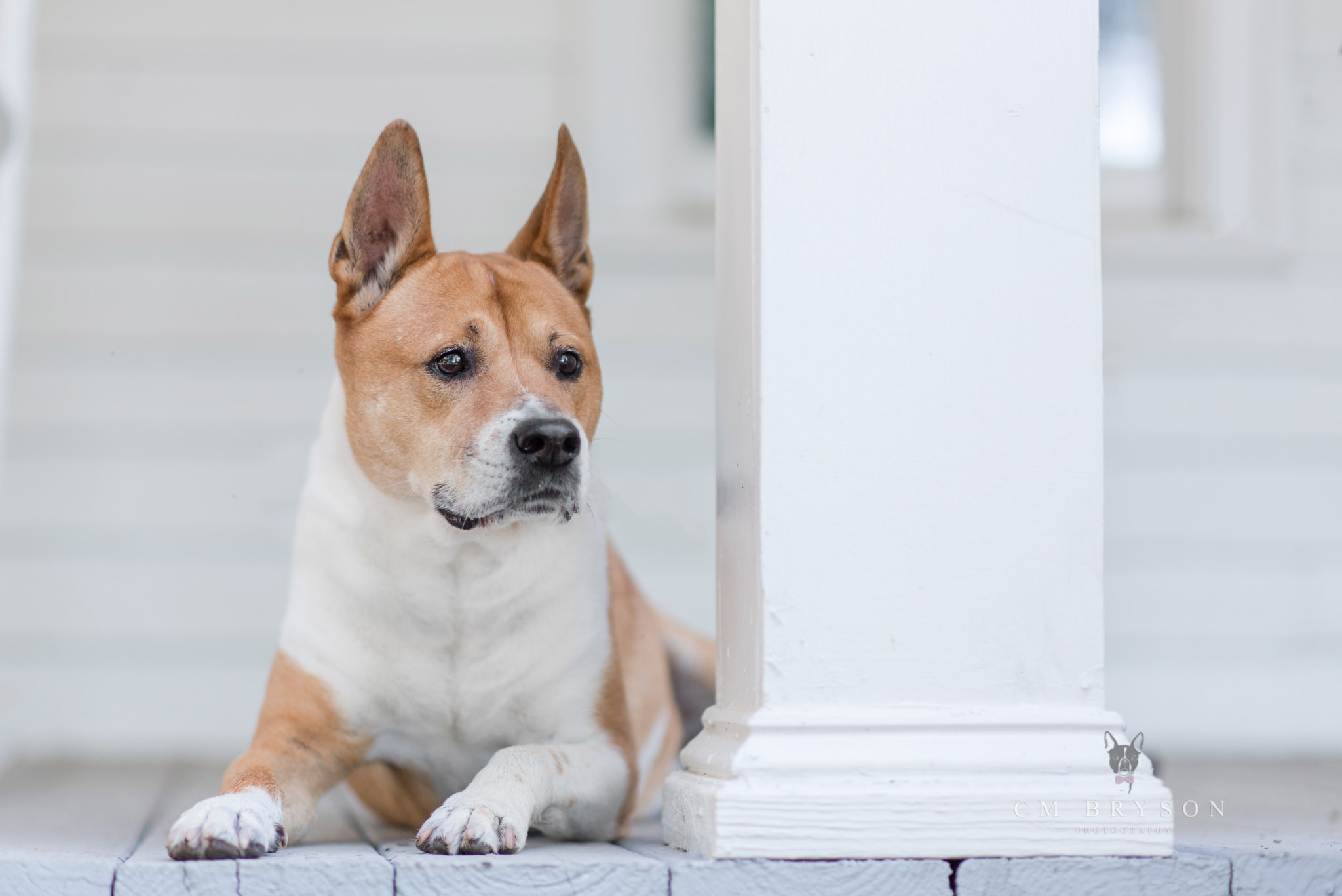 Planing your pet photography session with Atlanta pet photographer CM Bryson.