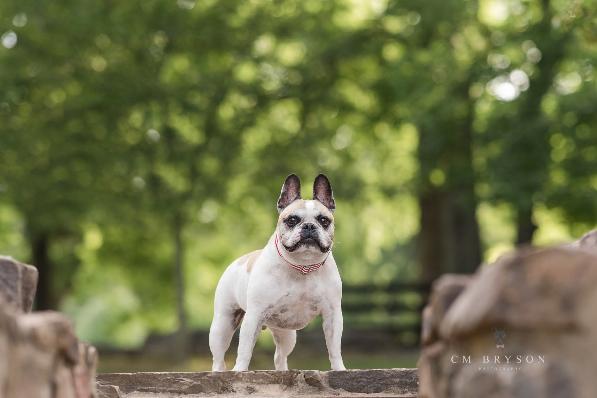 Choosing the best location for pet photography can be tough. Here Atlanta pet photographer Courtney shares her 3 step process.