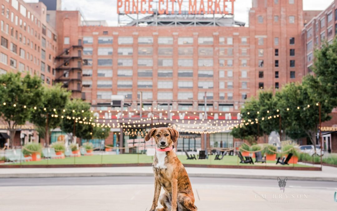Dog Friendly Ponce City Market – Atlanta, GA – Tahoe the Tiger Pup