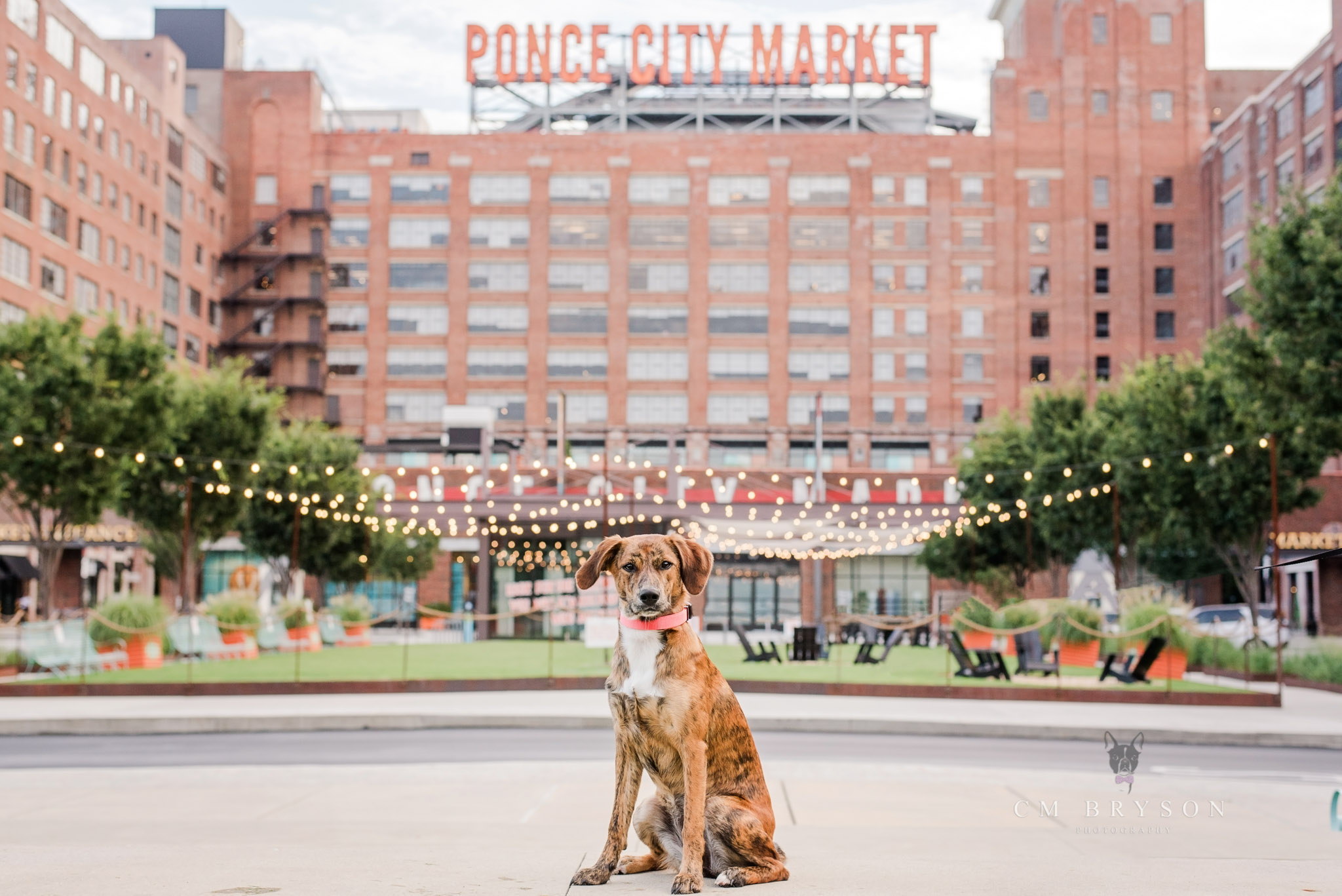 Atlanta pet photograph visits Ponce City Market in downtown Atlanta for an early morning pet photography session.