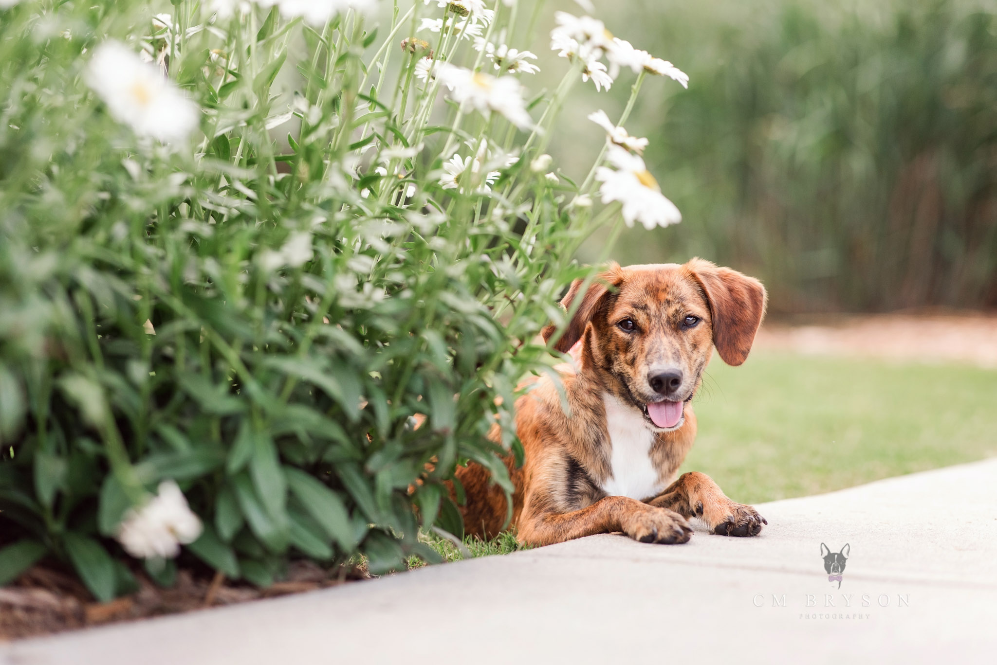 Finding natural locations is possible even when the focus of your pet's photo shoot is an urban adventure.