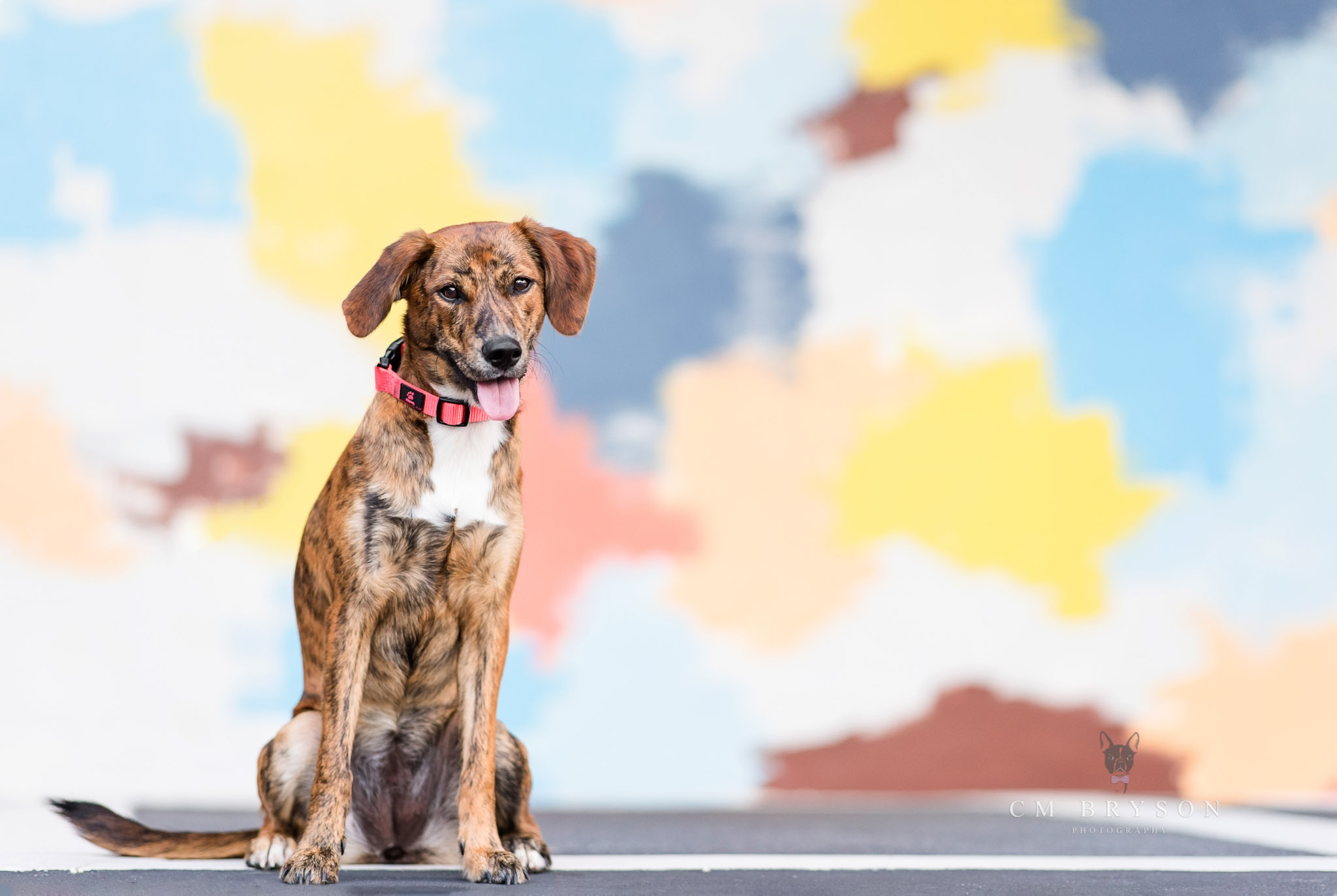 Dogs are welcome at Atlanta's Ponce City Market