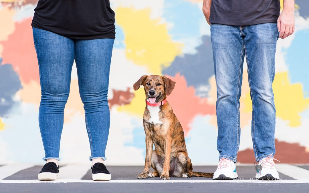 Dog photographer, CM Bryson, shares what dog moms should wear to their dog photography session.