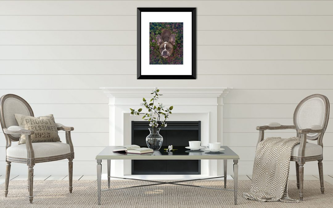 4 Ideas for Decorating Your Wall With Dog Photography