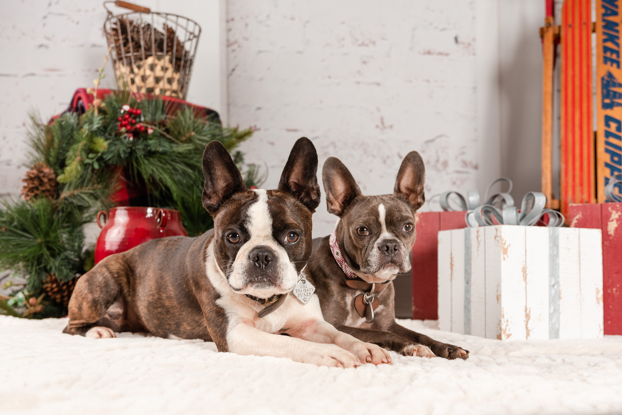 Atlanta pet photographer announces her latest pet portrait event to help fundraise for rescue dogs while giving dog moms beautiful pet photos for the Holidays.