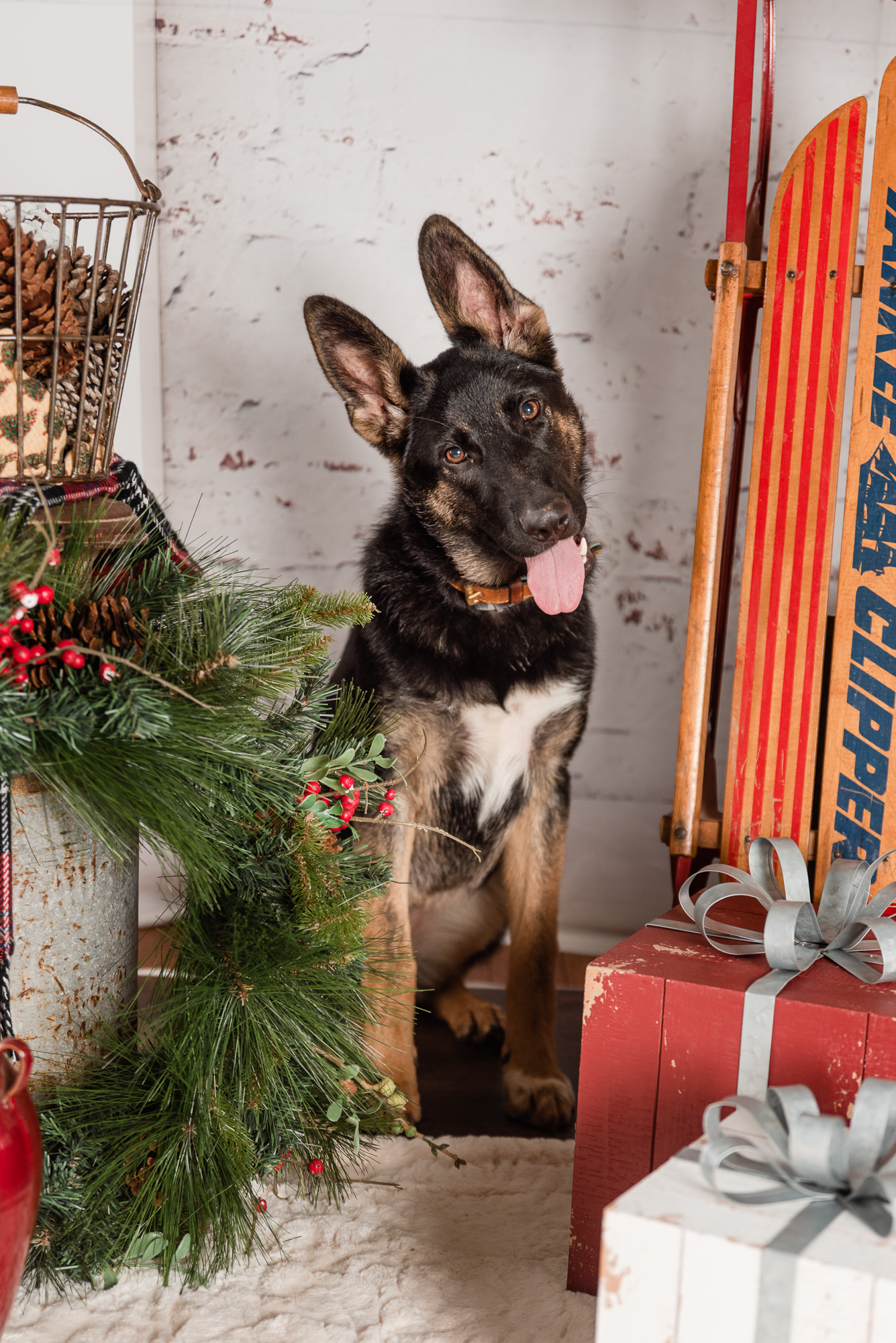 Athens dog photographer gives back with annual Holiday Hounds mini sessions to raise money for rescue animals.