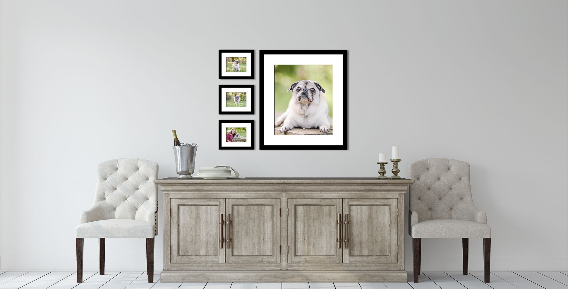 Creating a cohesive wall gallery with dog photographs of pugs in matching frames.