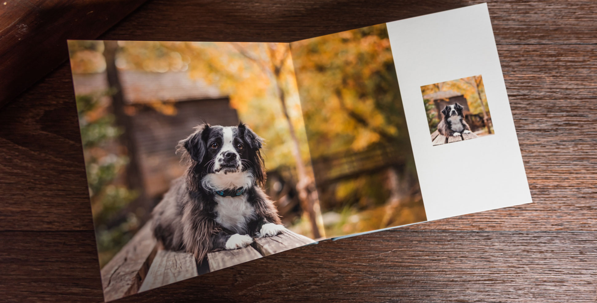 An album of your dog's photography session with Atlanta pet photographer CM Bryson tells the story of your dog's photo shoot.