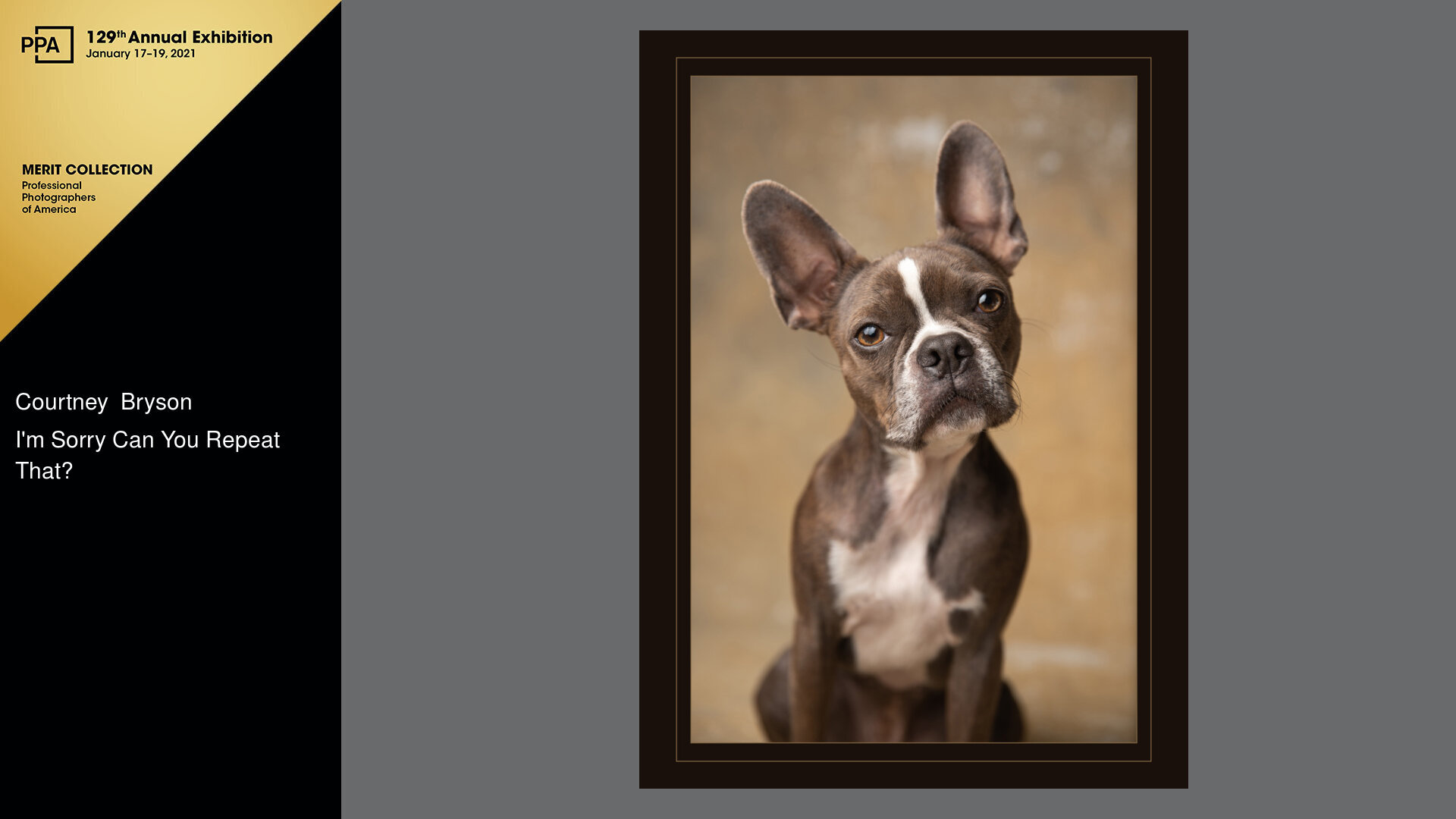 Atlanta pet photographer receives a merit image at the 2020 IPC photography competition by the Professional Photographer's Association.