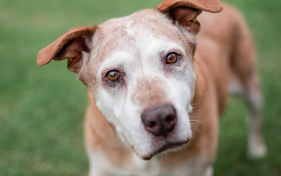 Senior dogs deserve extra special care. Courtney, an Atlanta dog photographer & dog rescuer, shares tips for senior dog care.