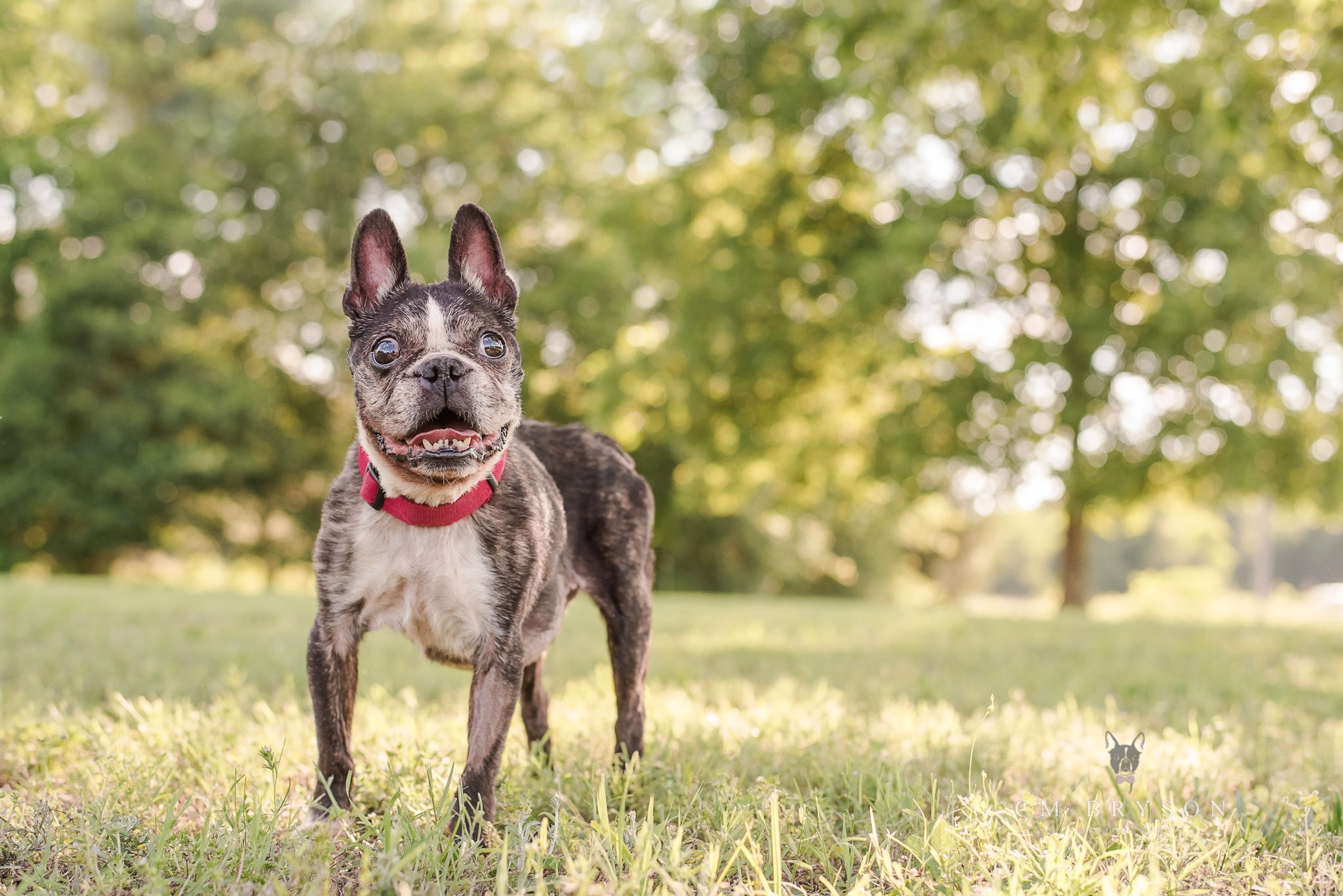 Professional pet photography allows you to preserve and remember the relationships you share with your senior dogs.