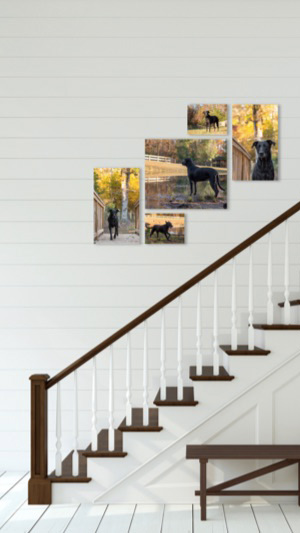 How to create a gallery wall from your custom dog photography session with CMB