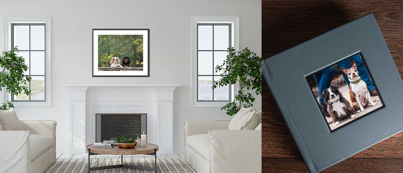 Investing in custom artwork from your dog photography session means caring for the artwork.