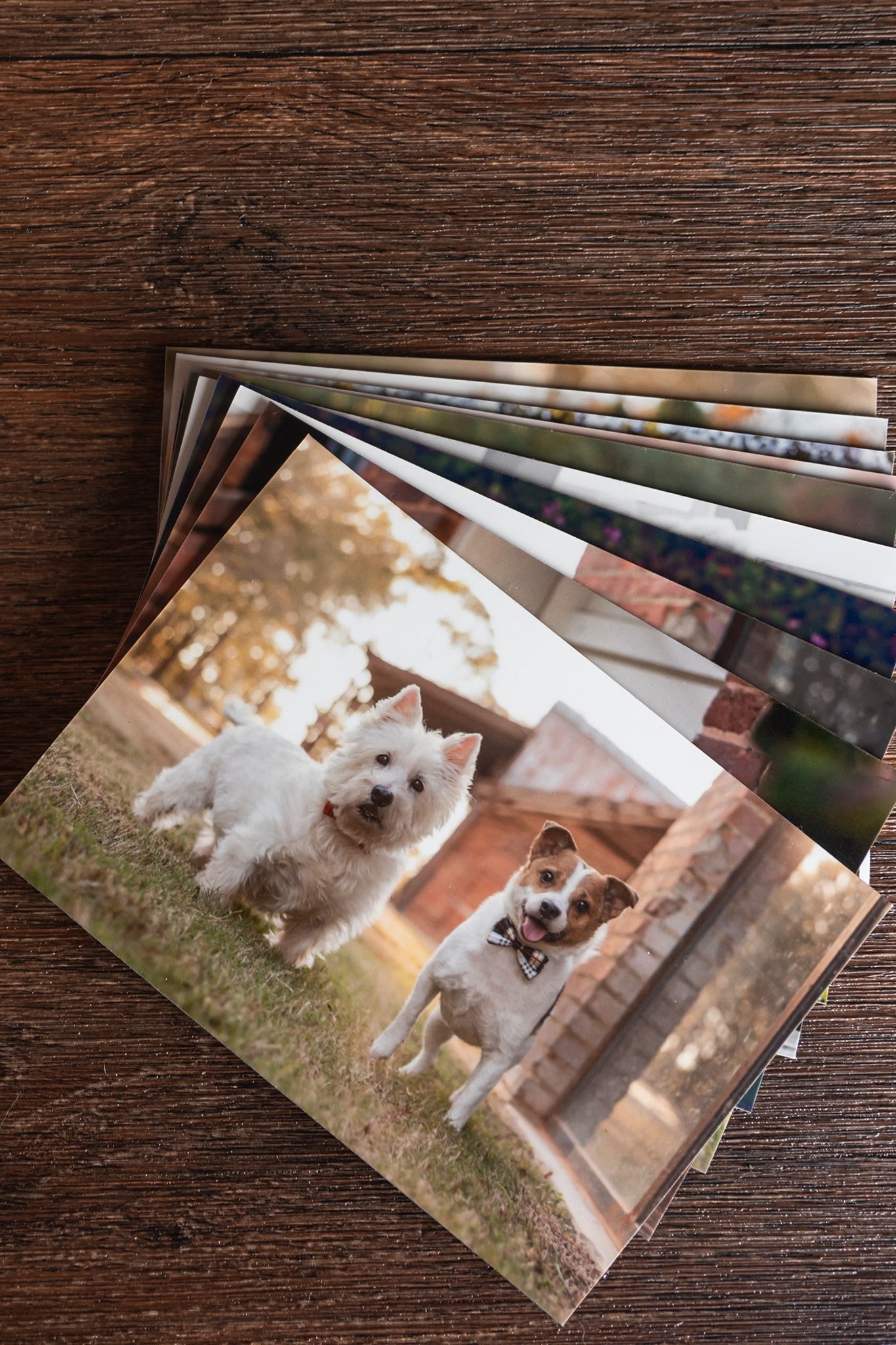 Mounted prints are just one way to display your dog photography by Atlanta dog photographer CM Bryson