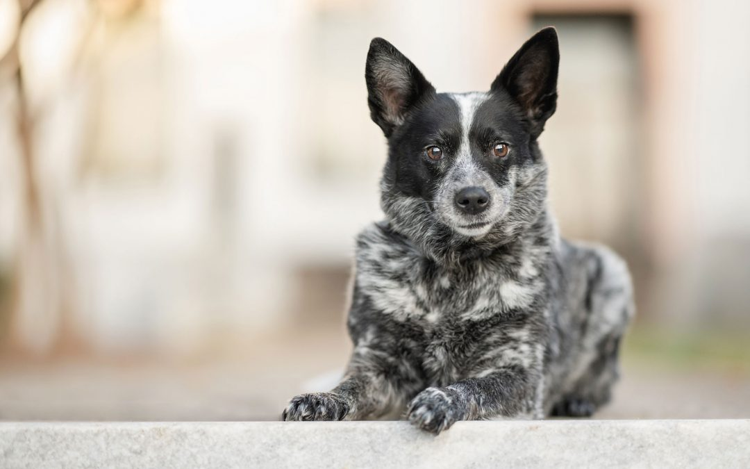 5 Things To Prepare Before Your Dog's Photo Shoot