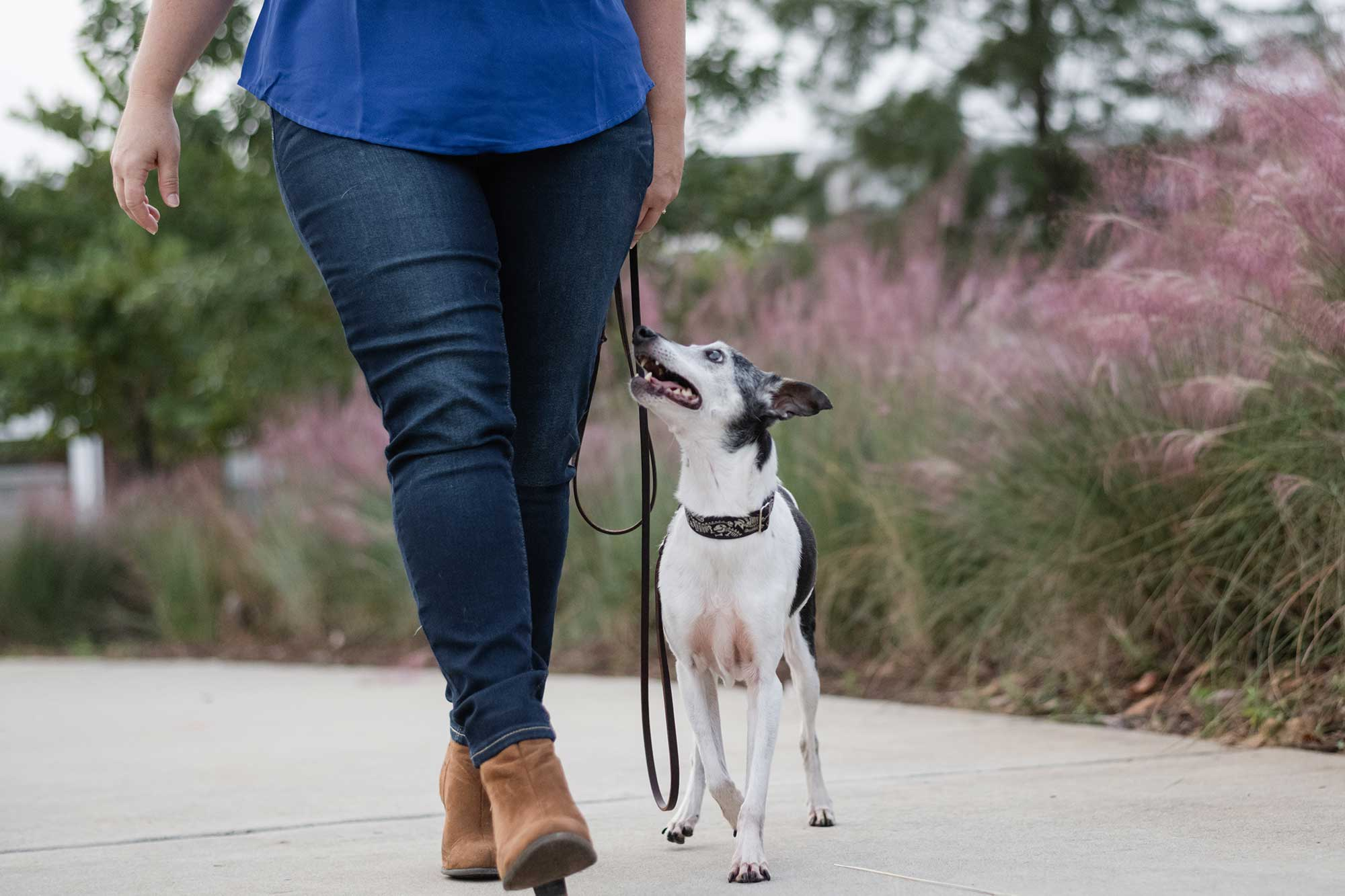 Senior dogs can have physical limitations that require routine modifications to tricks and behaviors as they age. Lawrenceville dog photographer Courtney Bryson gets advice from a dog trainer.