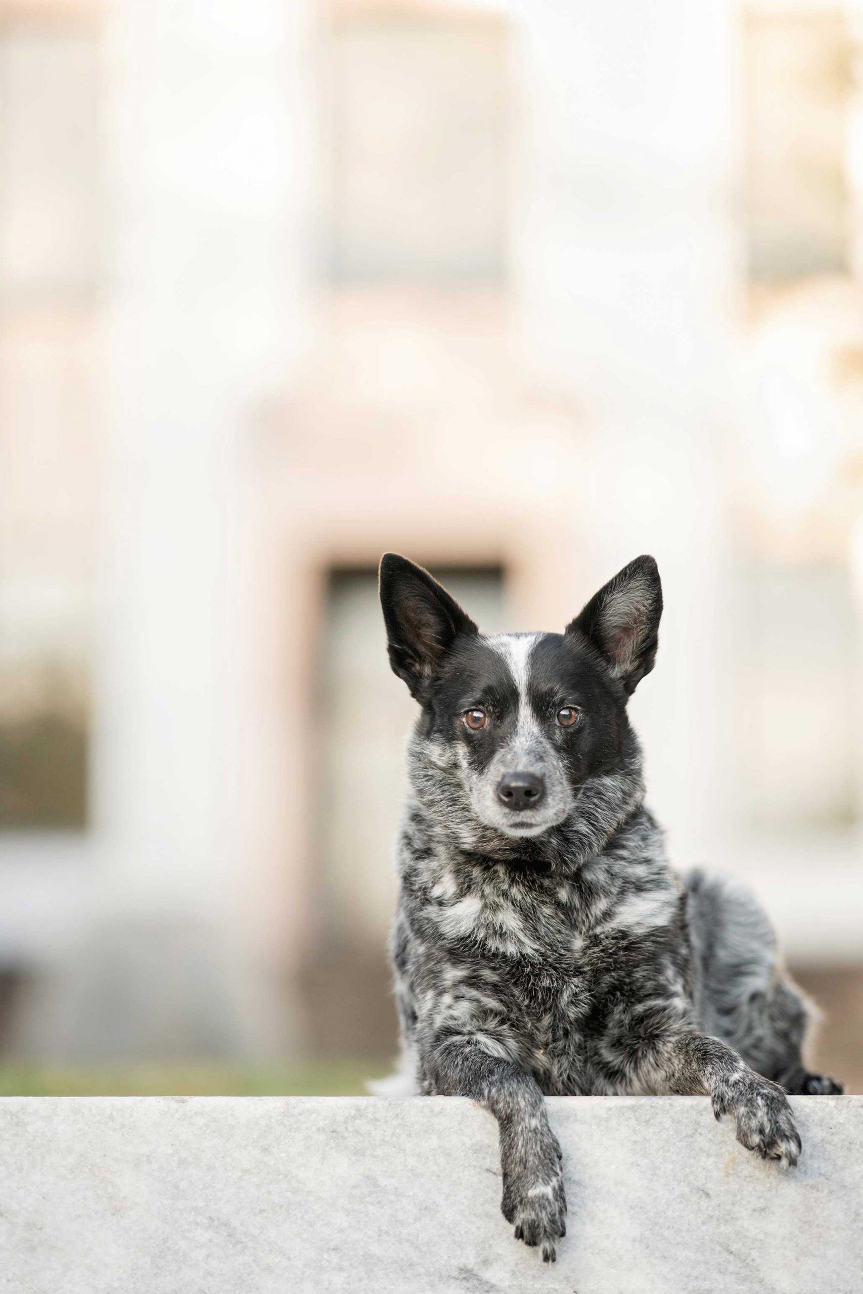 Choosing the best background for pet photography means eliminating distractions.