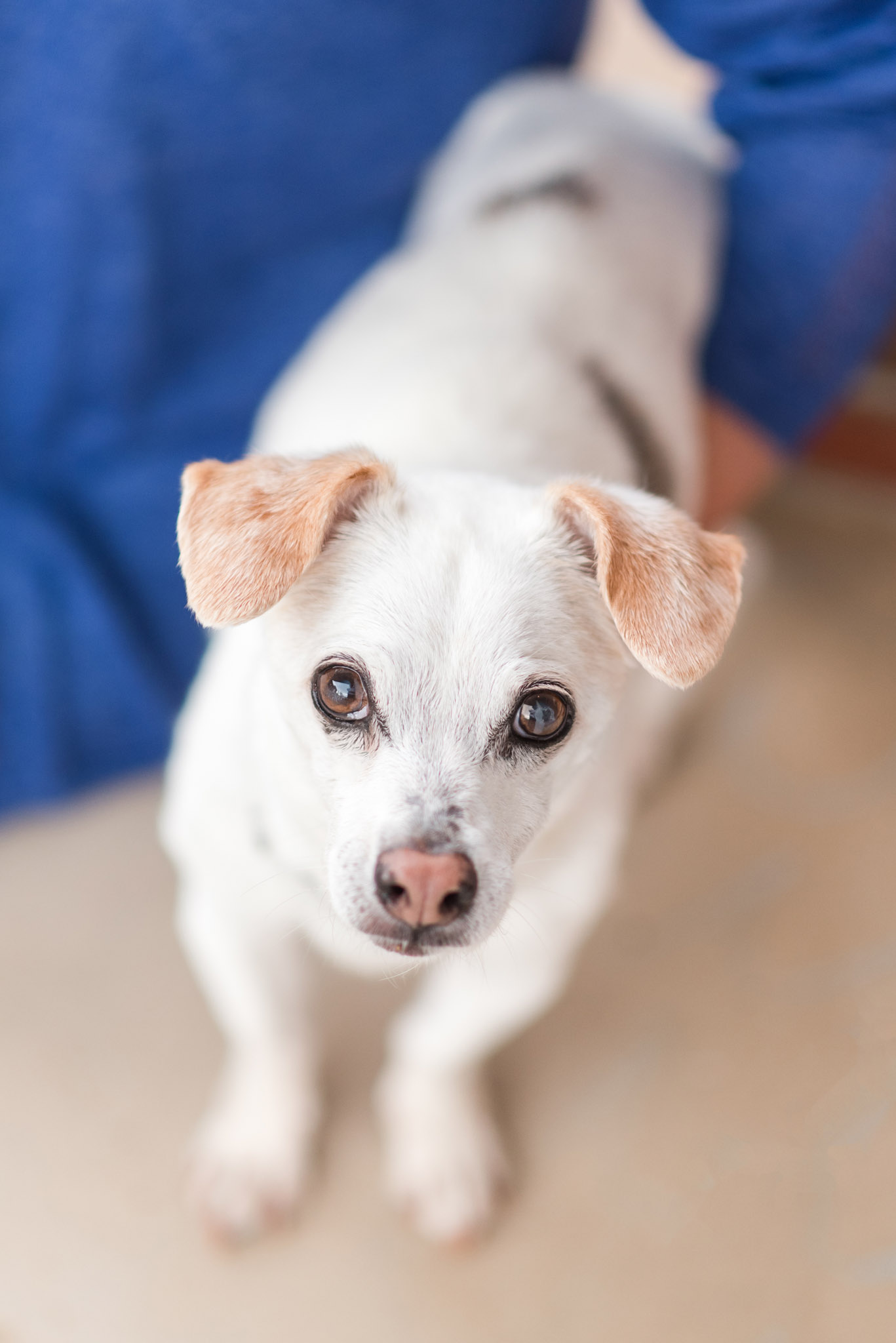 Senior dog proofing your house is about creating a comfortable space for you & your aging dog.