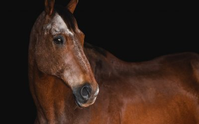 How to Prepare Your Horse for Their Equine Photo Session