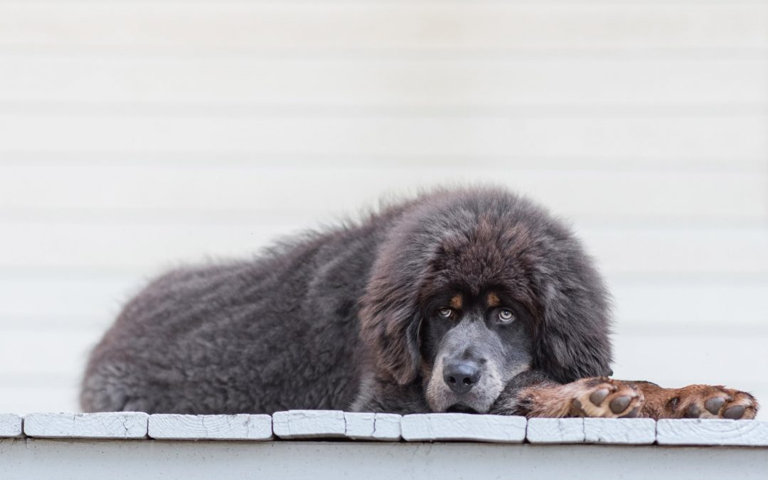 5 Must Have Photos from Your Pet Photography Session