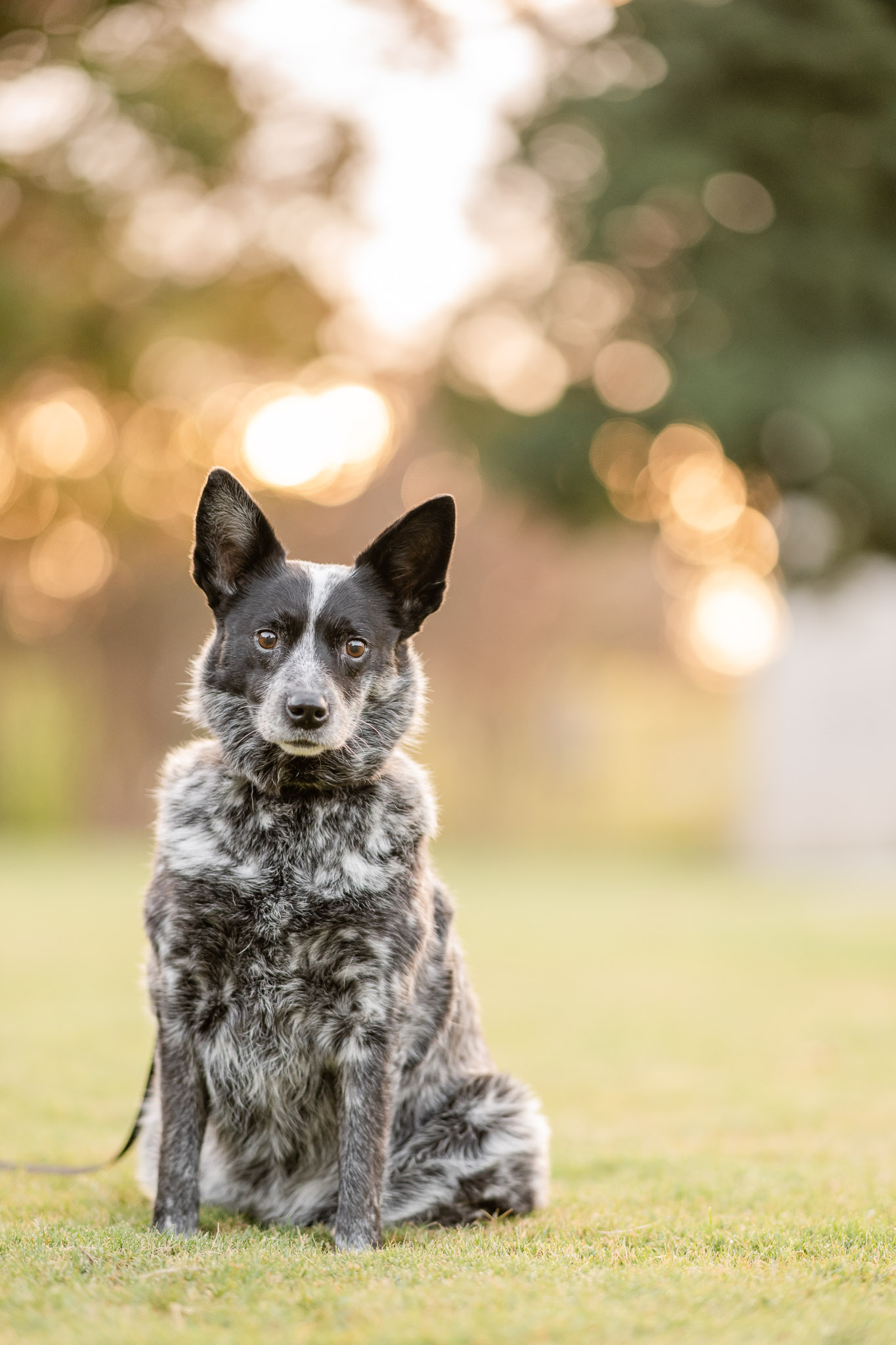 Atlanta pet photographer, Courtney Bryson, shares the top 5 must have photos from your pet photography session.