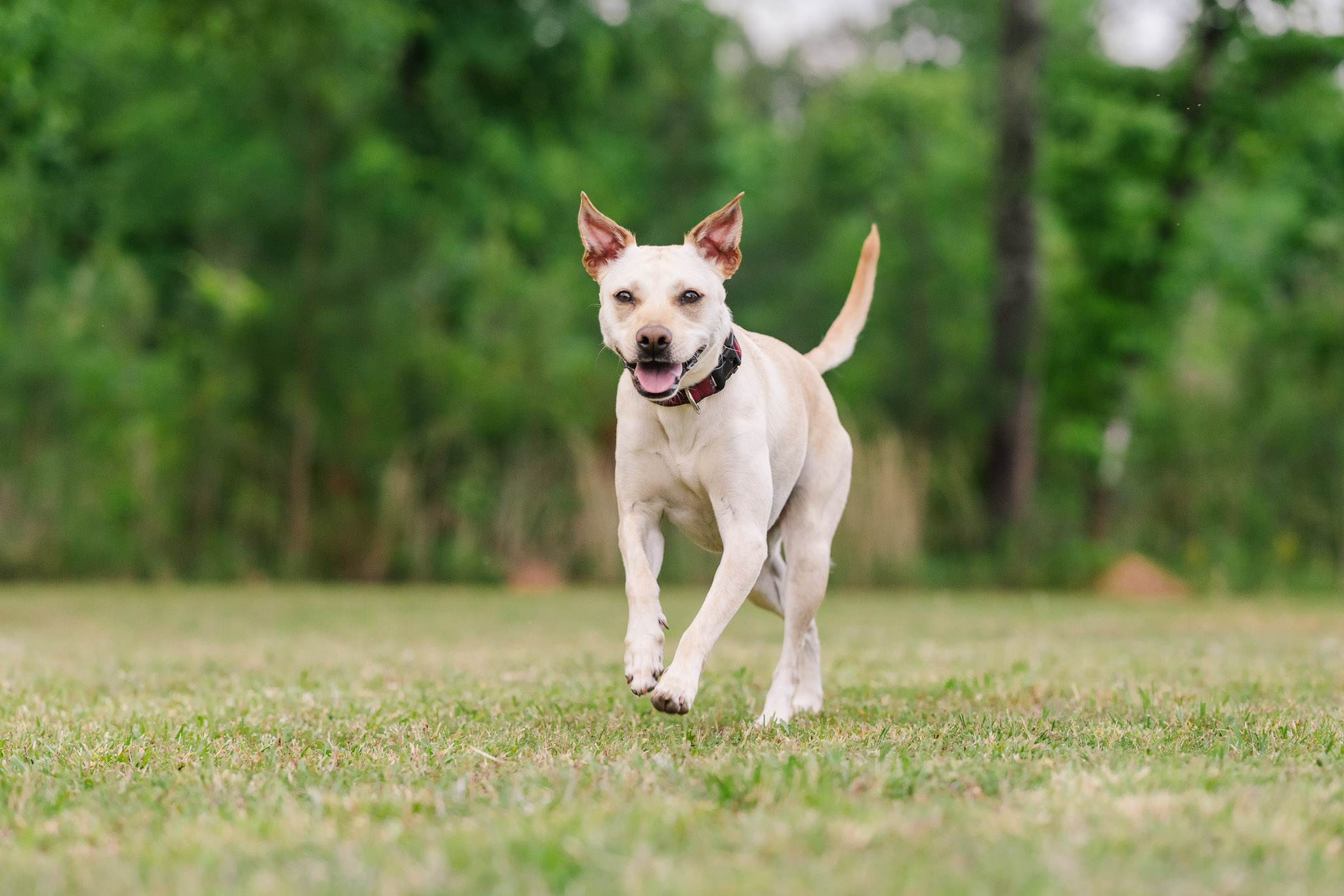 Action photos of dogs can be tricky to photograph without the help of a professional pet photographer.