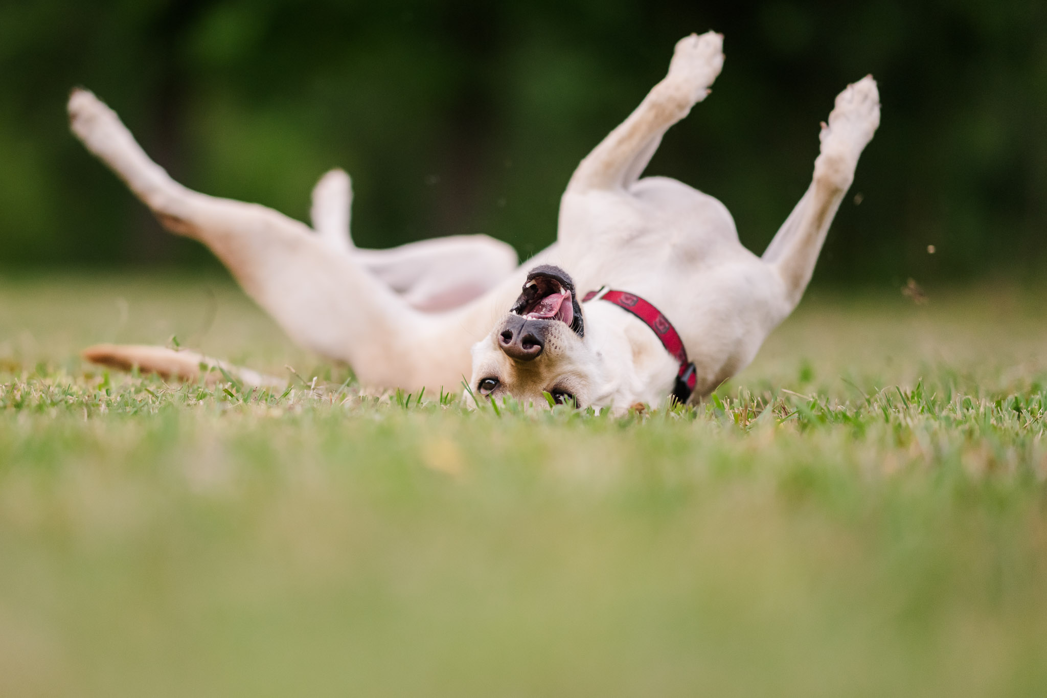 Capturing photos of your dogs doing their best tricks is a fun addition to any dog photography session.