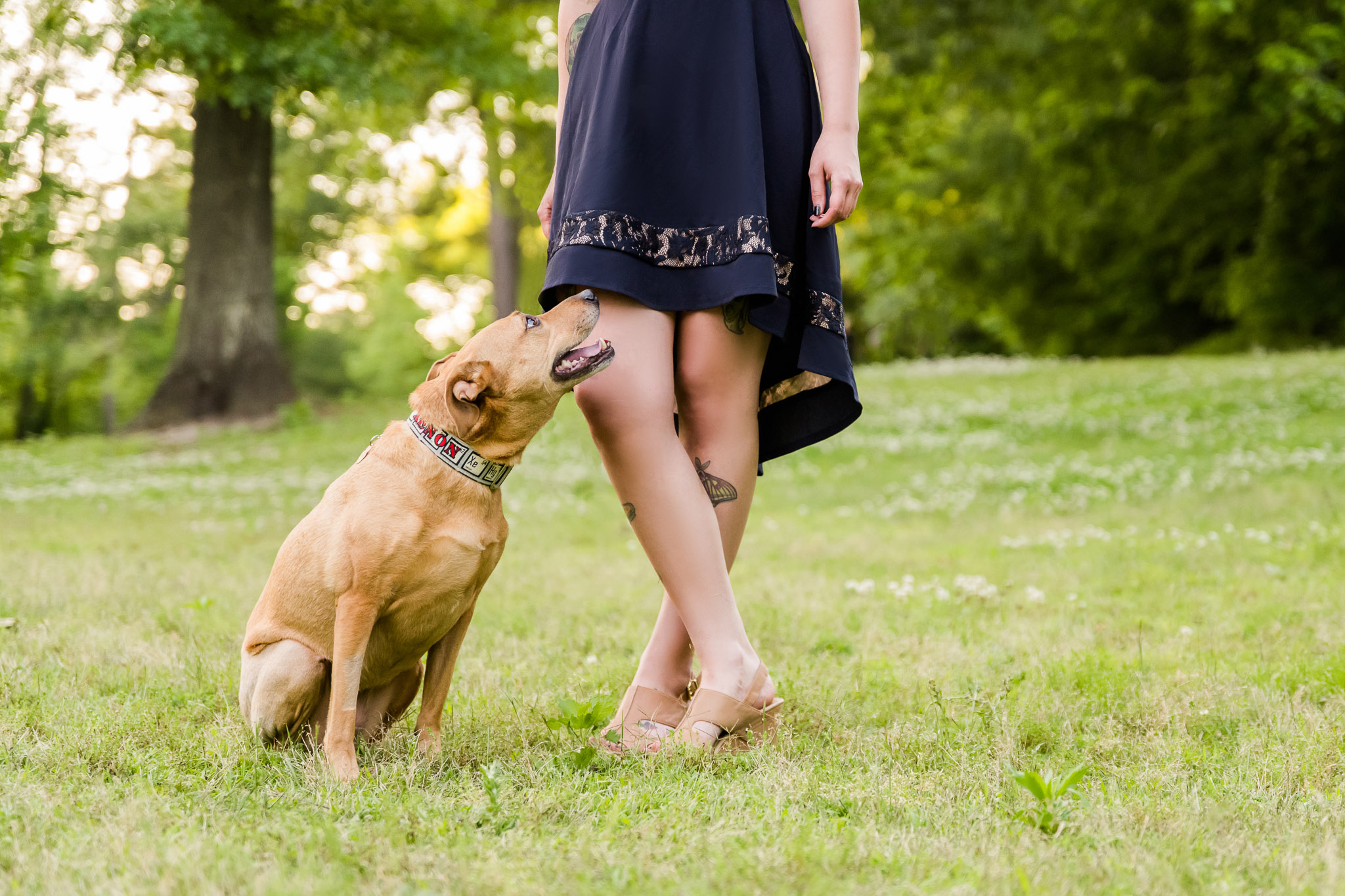 Images of owners with their dogs are a must have from any pet photography session - Atlanta pet photographer can help you be in the image while your dog remains the star of the show.