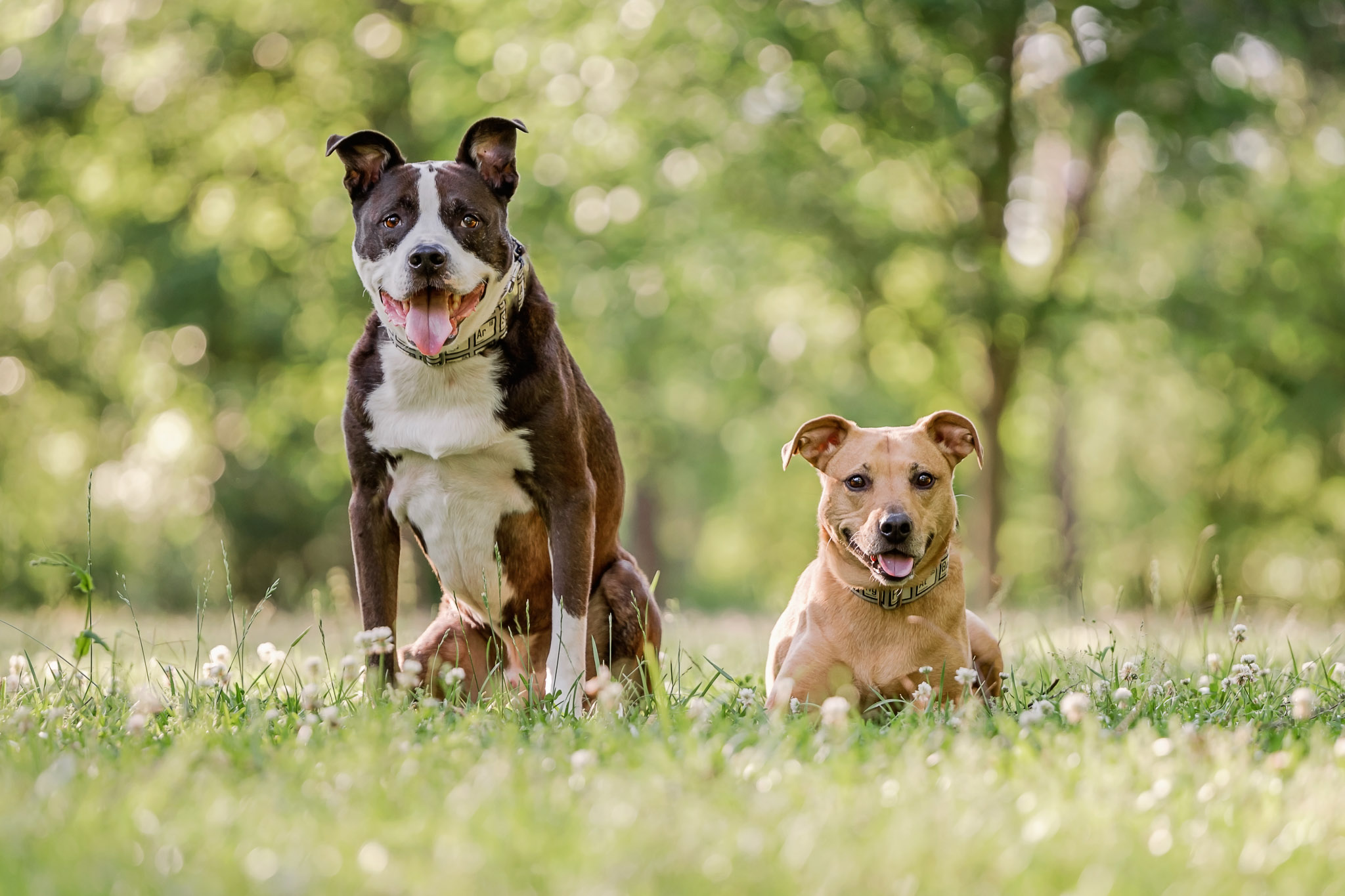 A must have image from your pet photography session - a photo of your dogs together.